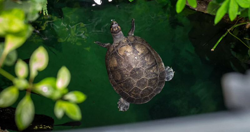 Best Filter For Turtle Tanks In 2019 – Buyer's Guide & Reviews