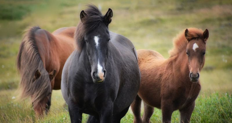 101 Horse Quotes for Horse Lovers